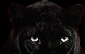 panther-psd79820