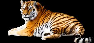 tiger_PNG550